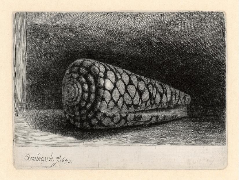 rembrandt_the_shell_b159_2